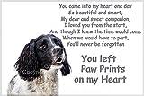 Springer Spaniel bereavement pet loss Fridge Magnet gift - you left Paw Prints on my Heart