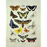 Varieties of butterflies and moths (Print On Demand)