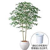 エフプランター 人工観葉植物-ヤマモミジ株立 GREEN-180-9号鉢-懸崖鉢