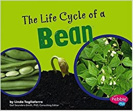 The Life Cycle of a Bean (Plant Life Cycles): Amazon.co.uk ...