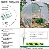 Betty Garden Telo NEW Ricambio per Serra (200 x 150 x h 175) - Teli per Serre