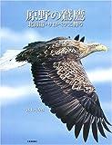 原野の鷲鷹—北海道・サロベツに舞う