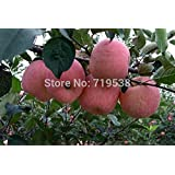 Generic 10 Seeds Bonsai Apple Tree Seeds Rare Fruit Bonsai Tree-- America Red Delicious Apple Seeds Garden For...
