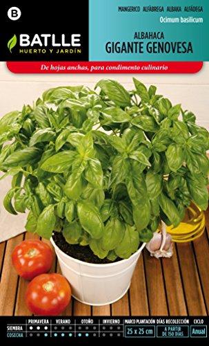 D nde comprar semillas de albahaca precios tiendas y - Porta piante aromatiche ...