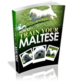 Dog Training: How To Train Your Maltese