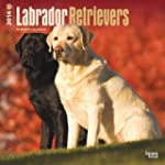 Labrador Retrievers 2014 Square 12x12