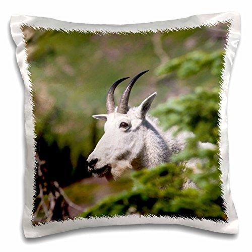 Danita Delimont - Goats - USA, Montana, Glacier NP. Mountain Goats on Hidden Lake Trail Pass. - 16x16 inch Pillow Case (pc_207456_1)