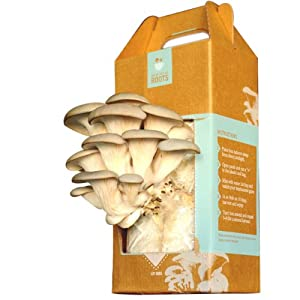 Back to the Roots Oyster Mushroom Kit