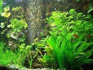 XXL Afrika Wasserpflanzen Set 400-500 l Aquarium
