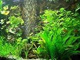 30 Aquarienpflanzen und Dünger für 3.000 l