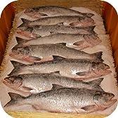 【鮭 山漬け】 一尾 釧路産の秋鮭を昔ながらの製法で塩漬けにしました