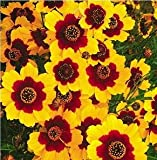 SD1500-0022 Mix Double Colors Coreopsis Flower Seeds, Perennial Seeds (50 Seeds)