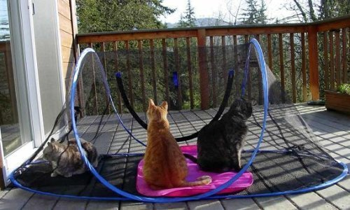 Outdoor Feline Funhouse