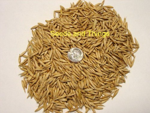 1 Pound Natural Organic Whole Oat Grain Seeds (Unhulled) BULK-- For Growing Oat grass to Juice, Sprouting Seed, Grinding to Make Flour & Bread, Growing Ornamental Oat Grass, for Cat Grass & More. Makes Excellent Food Storage. Outstanding Germination Rate