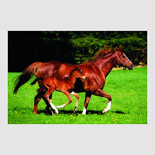 Kunstdruck Poster - Pferd & Pfohlen Horse Mare Foal Tiere 61 x 91,50 cm Poster, Bild, Cliprahmen optional, hier ohne Rahmen