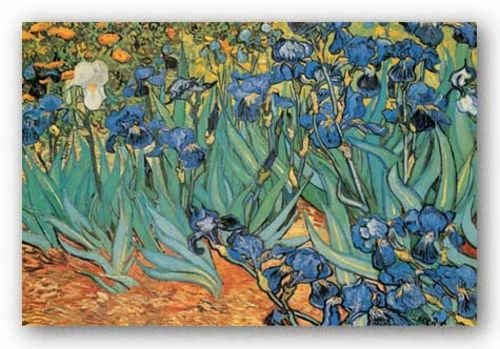 Irises by Vincent Van Gogh 20.5
