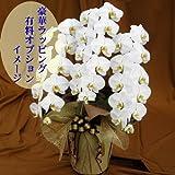 お母さんの誕生日 開店祝い 花 胡蝶蘭 3本立ち 少しだけミエを張りたいときにも最適 お届け日指定可能