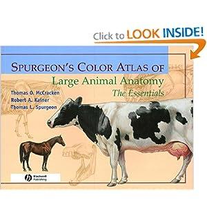 Spurgeon's Color Atlas of Large Animal Anatomy: The Essentials [Paperback]