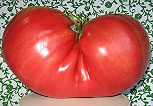 Big Zac Tomato 15 Seeds- World's Largest Tomato - HUGE