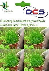 DCS (048)Spring Bonsai Aquarium grass 10 Seeds Moss Grass Novel Blooming Plant-2
