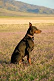 img - for Dobermans from my point of view book / textbook / text book