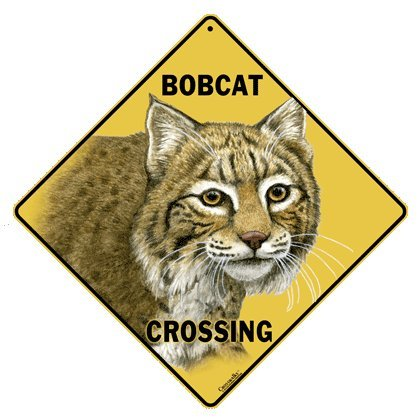 Bobcat Crossing 12