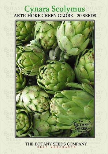 Cynara Scolymus 'Green Globe' (20) Saatgut - Artischocke 'Green Globe' Samen [Artichoke 'Green Globe']
