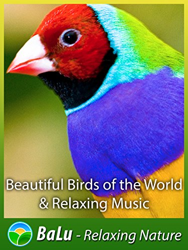 Beautiful Birds of the World & Relaxing Music