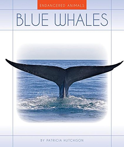 blue whale endangered animal cause and effect The grey whale in endangered because of  whales what is the cause and the endangerment of the gray whale what is the cause and the endangerment of the gray whale.