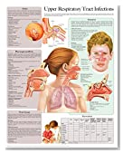 Upper Respiratory Tract Infections e chart: Full illustrated