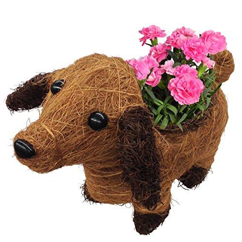 わんわん カーネーション フラワーギフト 花鉢 母の日ギフト