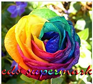 100 seeds rare rainbow rose seed for your for Growing rainbow roses from seeds
