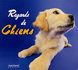 Regards de chiens