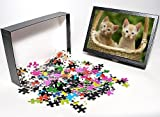 Photo Jigsaw Puzzle of Cat - ginger tabb...