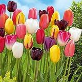 tulpen pflege tulpen in der vase l nger frisch halten bei. Black Bedroom Furniture Sets. Home Design Ideas