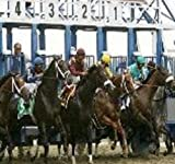 Amazing Daily Doubles Horse Racing System