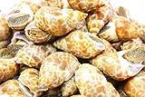 築地の王様 バイ貝 2kg ばい貝 バイ貝 バイガイ 煮付け 焼き物 おつまみ 酒の肴 業務用 築地 レシピ ギフト ランキングお取り寄せ