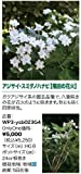 WP3-ysb023G4 アジサイ・スミダノハナビ(隅田の花火) ローグリーン オンリーワンクラブ Only One club