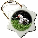 "3dRose orn_158224_1 Muscovy Duck Lake Ella Tallahassee Florida Snowflake Ornament, Porcelain, 3"""