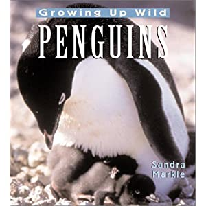 Penguins: Growing Up Wild