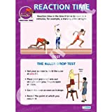 Human Reaction Time PE Educational Wall ChartPoster in laminated paper A1 850mm x 594mm