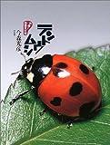 テントウムシ (やあ! 出会えたね 3)