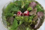 九州 佐賀県 園田農園 葉物 有機野菜サラダミニセット(JAS有機栽培)