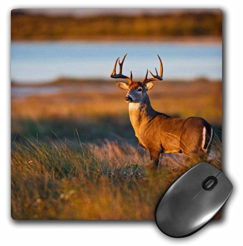 3drose White-Tailed Deer, Odocoileus Virginians, Male In Habitat, Texas, USA - Mouse Pad