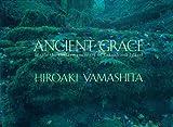 Ancient Grace: Inside the Cedar Sanctuary of Yakushima Island