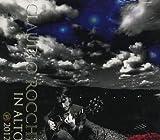 In Alto by Rocchi, Claudio (2011-10-25?