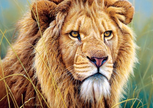 Buffalo Games Eyes of The Wild, King of Beasts - 500pc Jigsaw Puzzle