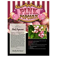 Pink Popcorn® Gourmet Blueberry Plant - New/Easy to Grow/Hardy - 4