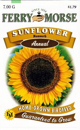Ferry-Morse Annual Flower Seeds 1157 Sunflower - Mammoth (Grey Stripe) 7 Gram Packet