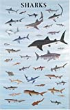 Sharks-Poster-Posters